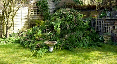Hazardous Tree Felling and Removal